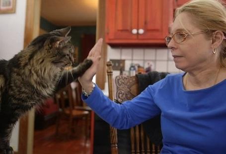Foto de Kim treinando um de seus gatos