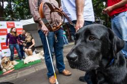 Foto de uma mulher atravessando a rua com um cão-guia labrador preto