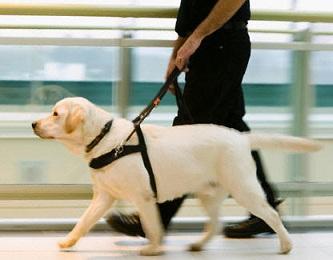 Foto de um cão guia