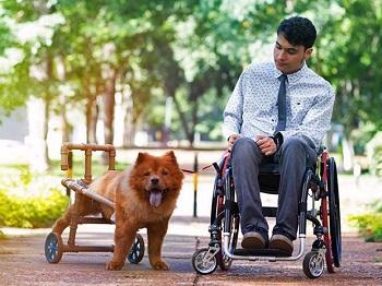 Leão está ao lado de um rapaz cadeirante