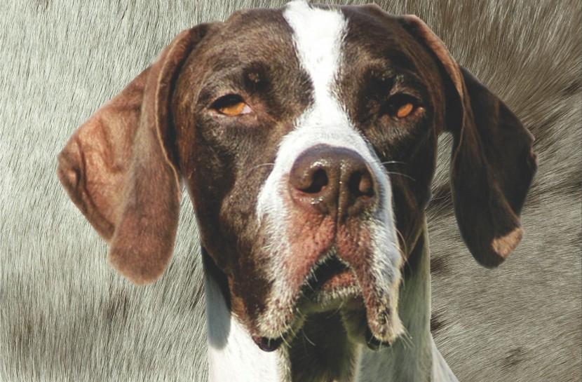 Cachorra branca e marrom, Missy