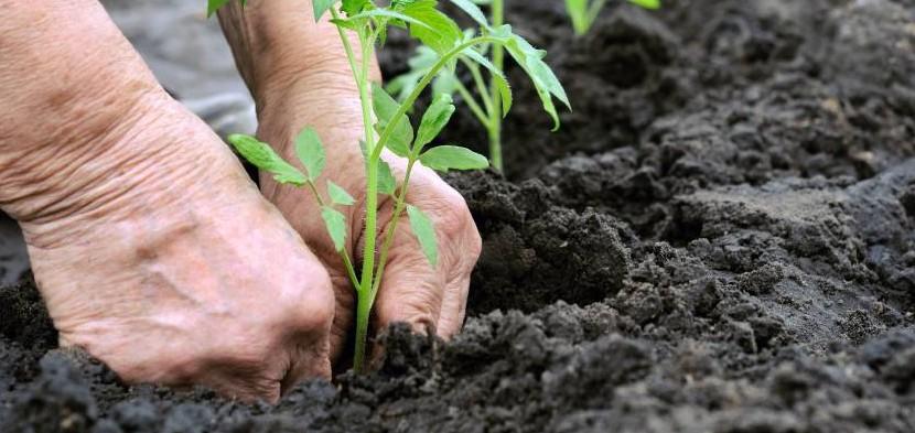 Close em mãos trabalhando no plantio de uma muda de planta.