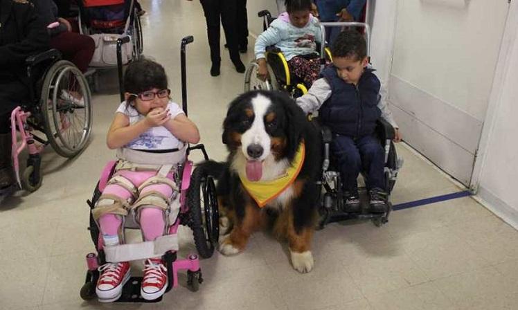 Em um corredor fechado, três crianças em cadeiras de rodas fazem carinho em um cachorro de porte médio